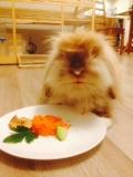 Bunny roczek 1