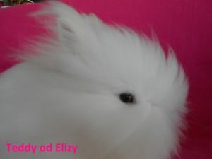 Daisy na web DSCN6156